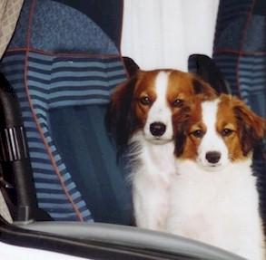 hund mammaleiste entfernt folgen
